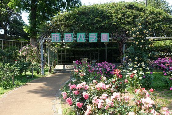 千葉市都市緑化植物園 バラ園