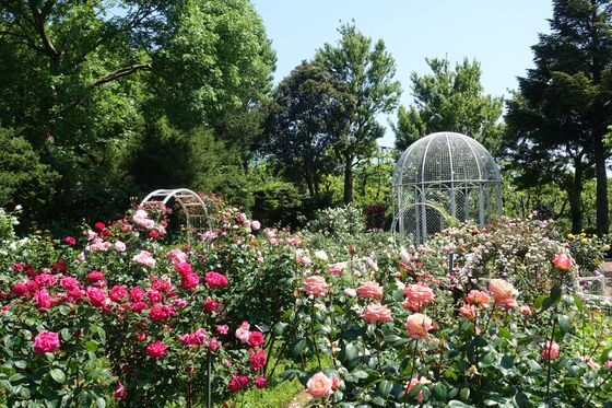 こども植物園 バラ