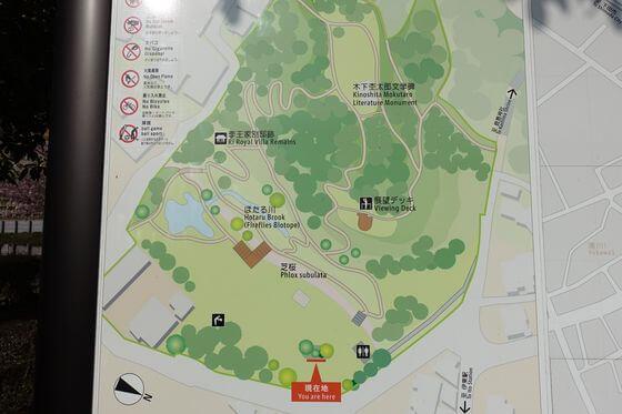 伊東公園 寒桜 場所