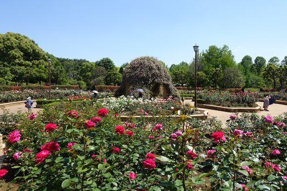 柏の葉公園 バラドーム