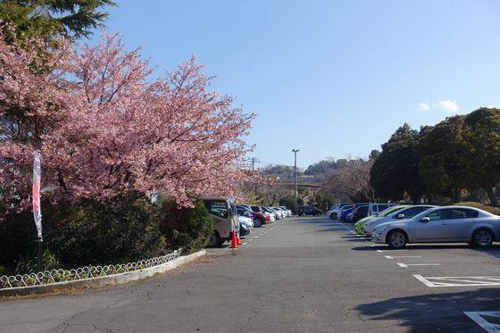 小室山公園 つばき園 駐車場