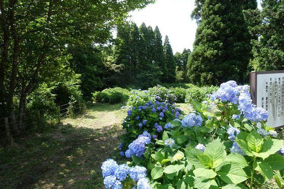 昭和の森 あじさい園