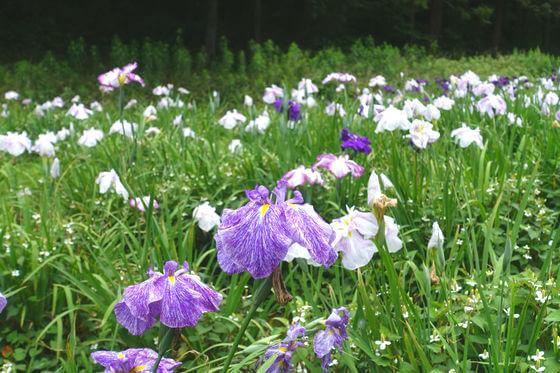 昭和の森 湿生植物園