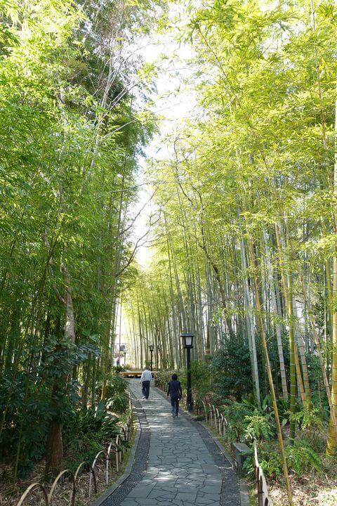 竹林の小径 修善寺