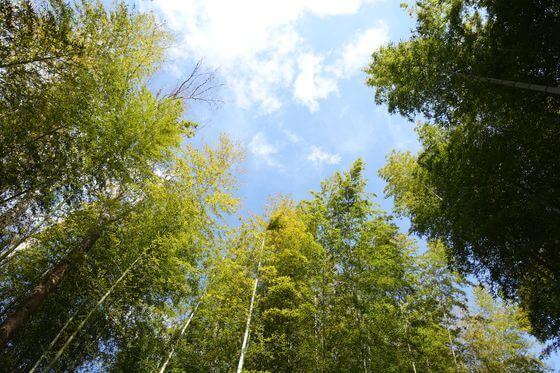 竹林の小径 ライトアップ