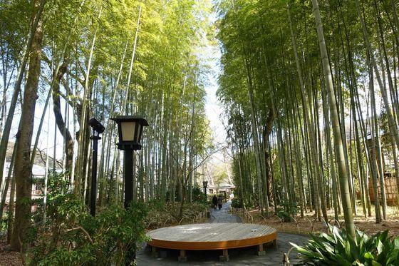 修善寺温泉 観光