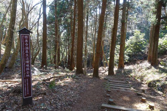 修善寺温泉生活環境保全林