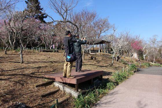 修善寺梅林 富士山ビュースポット