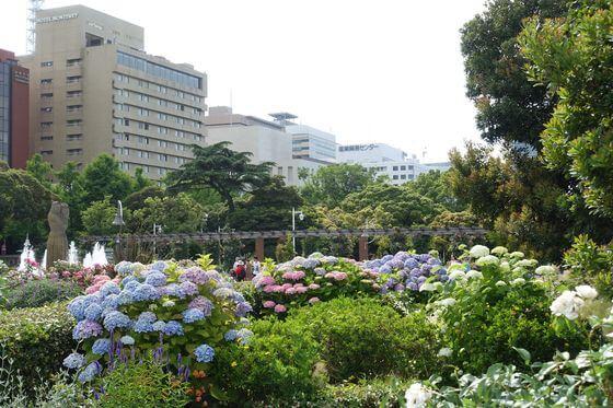 山下公園 紫陽花