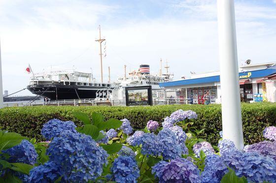 山下公園 日本郵船氷川丸 あじさい