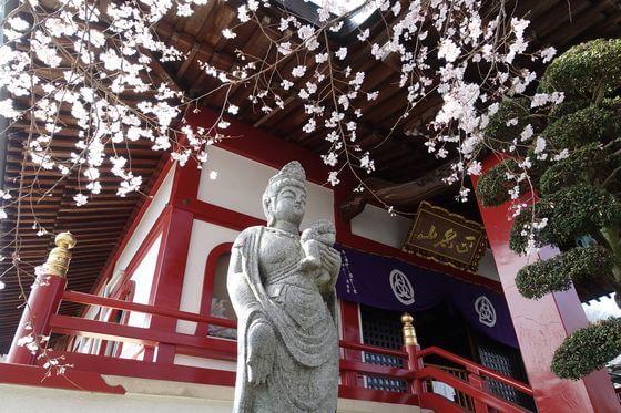 高尾駅 大光寺 桜