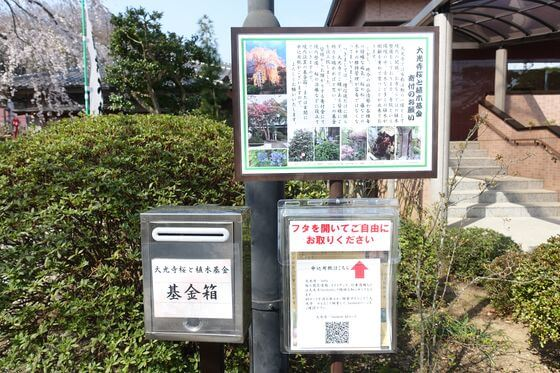 大光寺桜と植木基金