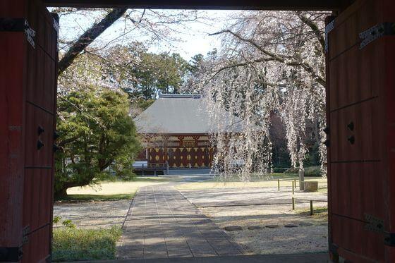 栄福寺 千葉 桜