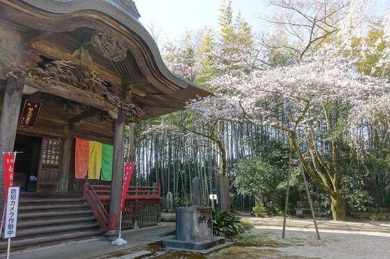 栄福寺 染井吉野