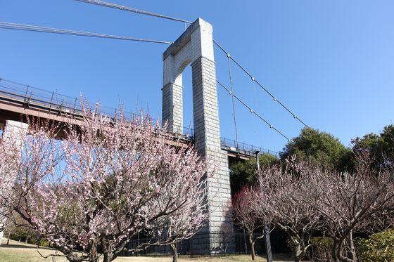 秦野戸川公園 梅
