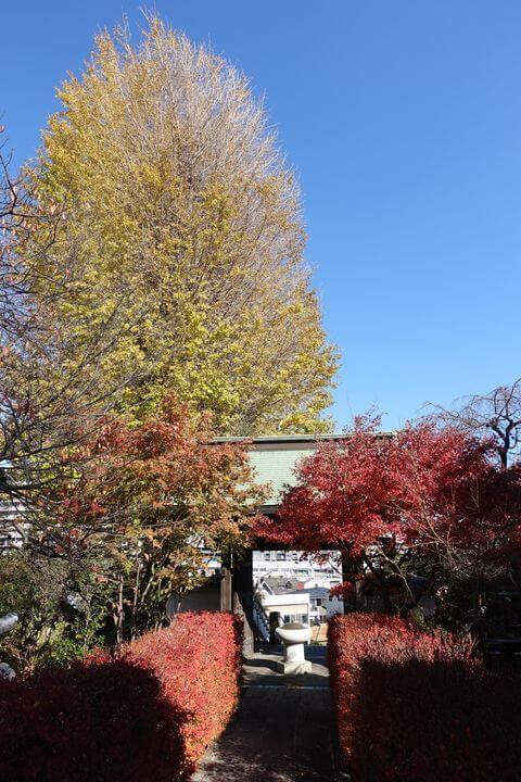 法性寺 横浜 紅葉