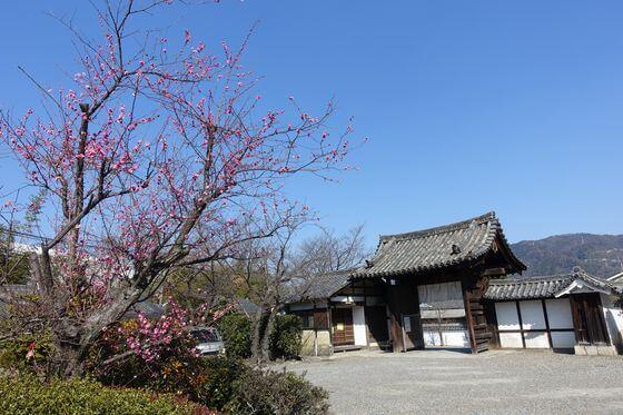 京都 勧修寺 梅