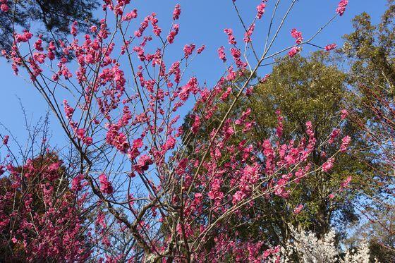 奈良公園 梅園