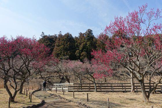 梅 こども自然公園