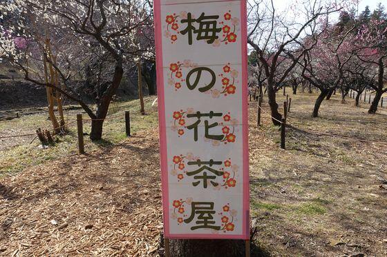 こども自然公園 梅まつり