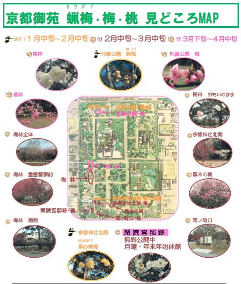 京都御苑 蝋梅 場所