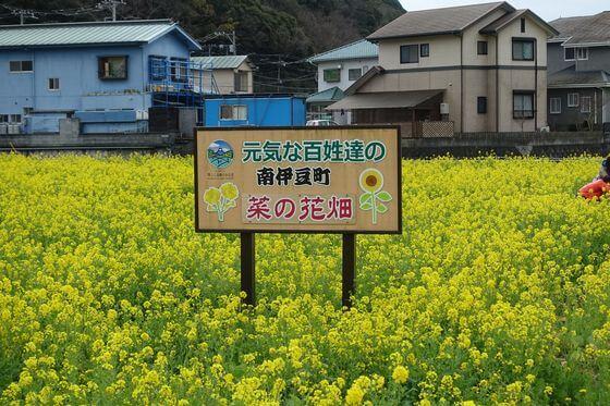 元気な百姓達の菜の花畑
