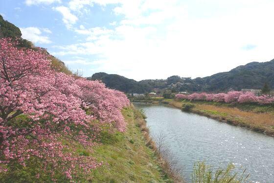 桜と菜の花ウォークラリー