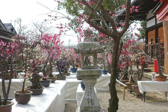 奈良県 盆梅展