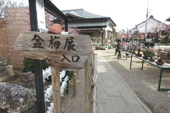 菅原天満宮 奈良 盆梅展 入口