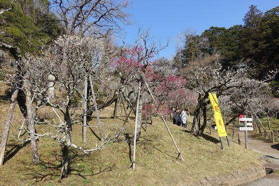 成田山 梅園