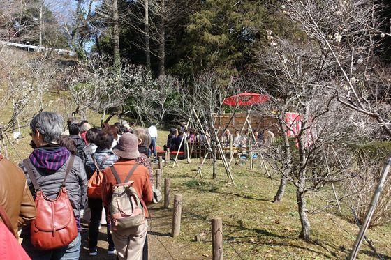 成田山公園 梅まつり 野点
