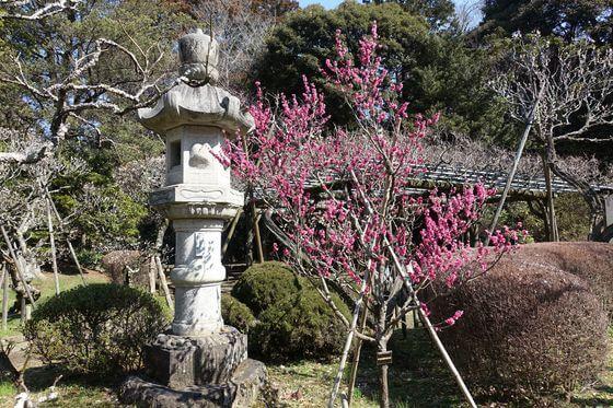 成田山公園 梅園