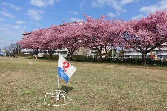 佐倉 河津桜