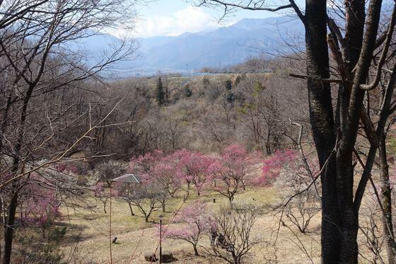 敷島総合公園 梅園