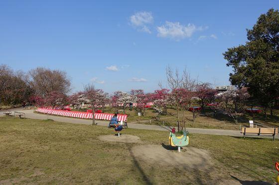 梅小路公園 梅林
