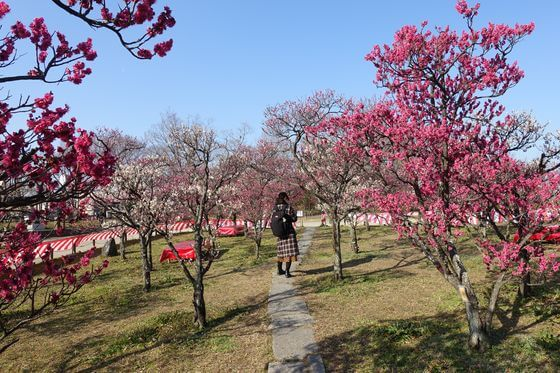 梅林 梅小路公園