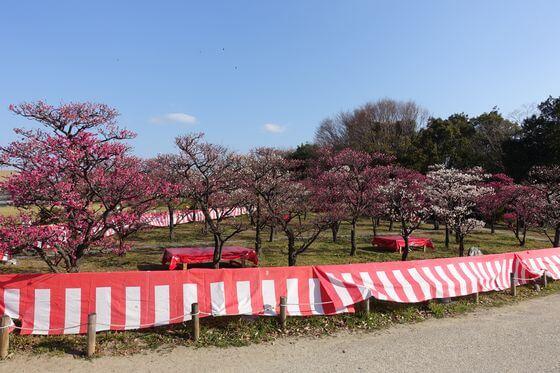 梅小路公園 梅まつり