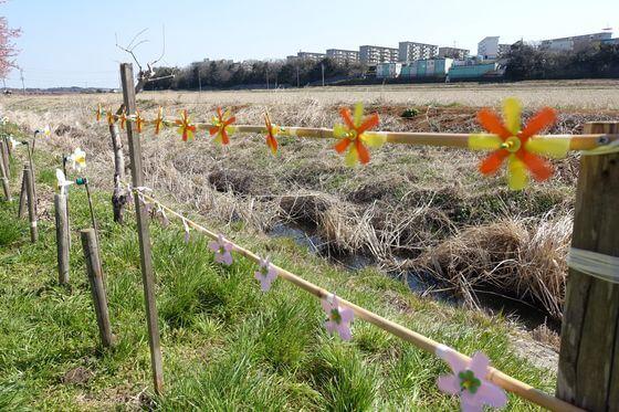 八千代新川千本桜 風車