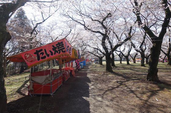 あけぼの山公園 桜まつり