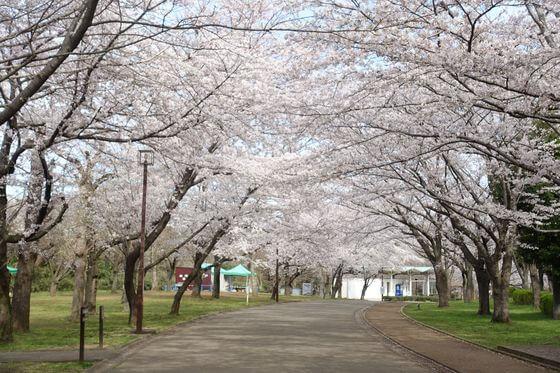 の 森 公園 青葉