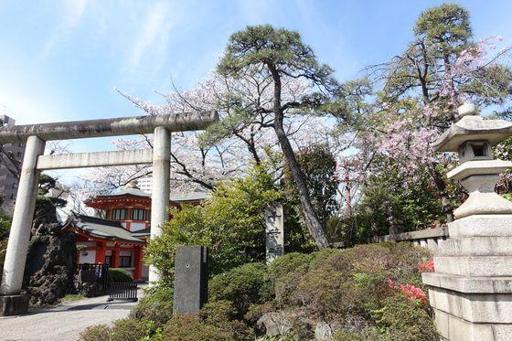 桜 千葉神社