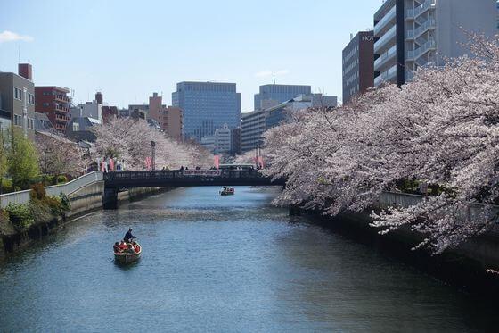 大横川 黒船橋 桜