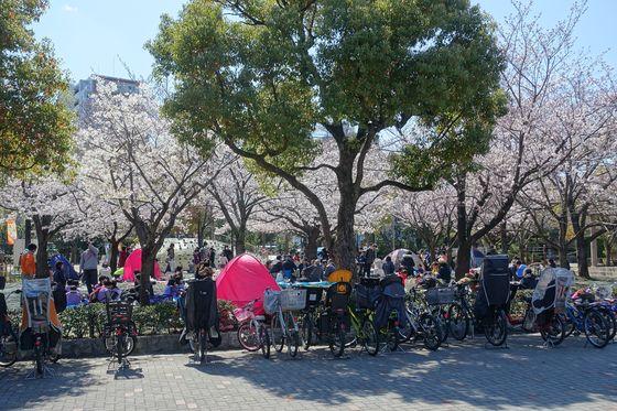 江戸川区 桜