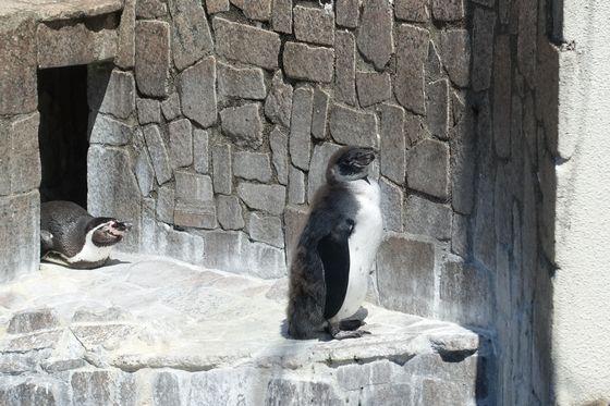 行船公園 ペンギン