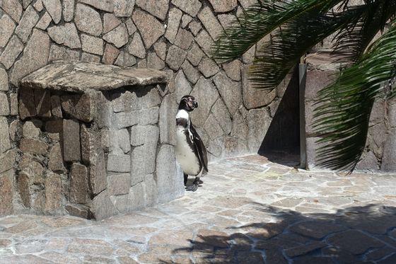 行船公園 自然動物園 ペンギン