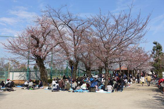 羽根木公園 お花見