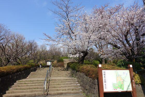 梅ヶ丘駅 桜
