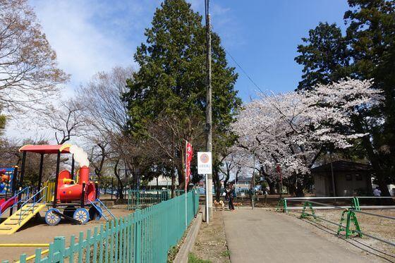 初雁公園 桜