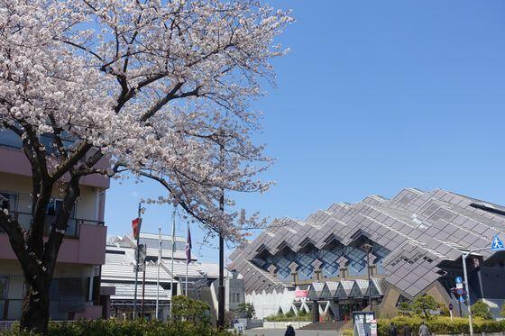 東京武道館 桜