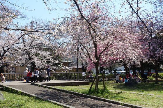 東綾瀬公園 お花見